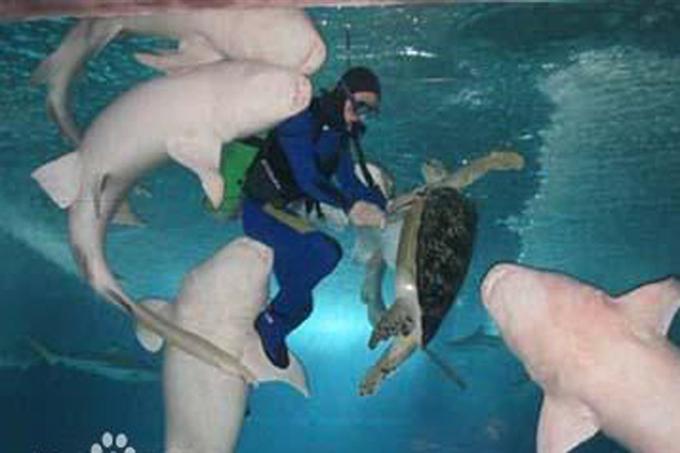 nhân viên sở thú đang chăm sóc cho động vật