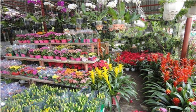 trung tâm giao dịch hoa