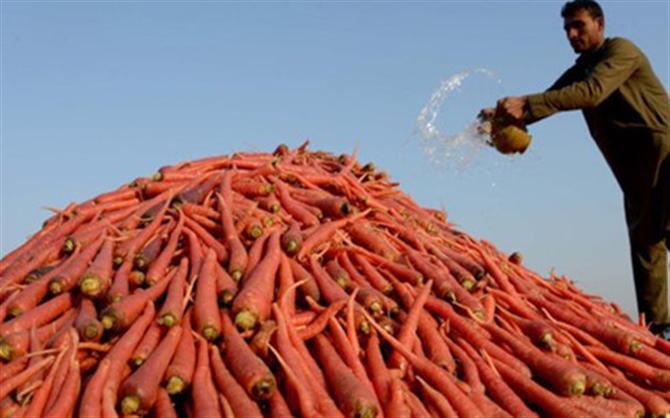 WTO nhất trí bỏ trợ giá xuất khẩu nông sản