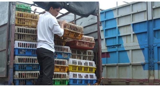 """""""Phát sốt"""" với đề xuất nhập khẩu gà từ Trung Quốc"""