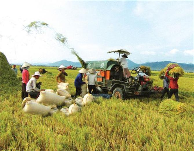 Thách thức nào khi tham gia chuỗi giá trị nông sản toàn cầu